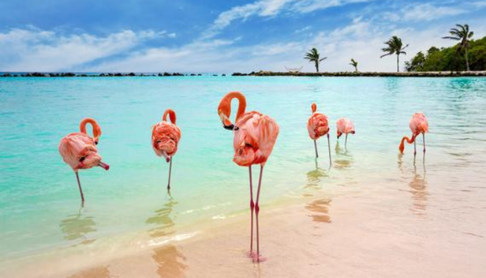 Last Minute Aruba Travel Deals